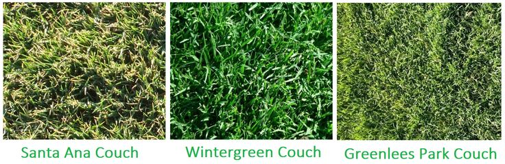Couch Grass Varieties Also Make A Good Choice