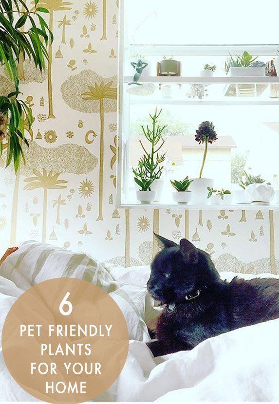 6 Pet Friendly Plants /