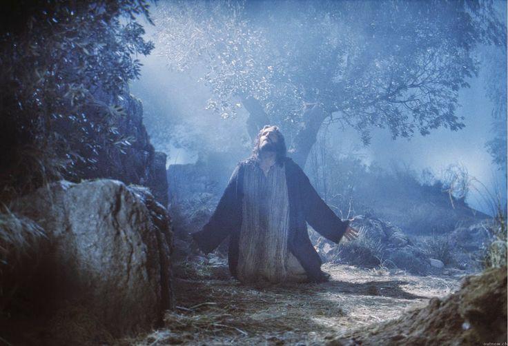 """PETALI DI CILIEGIO ...per coltivare la speranza: """"The Passion"""""""