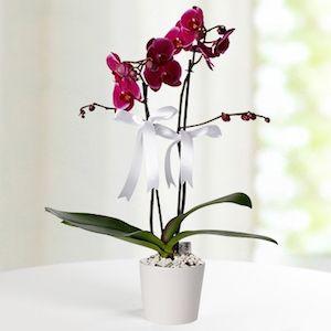 2 Dal Mor Orkide - 140,42 TL #doğumgünühediyeleri