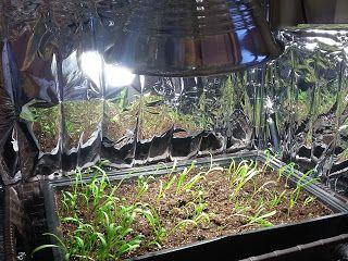 Make- shift Grow Light Garden industrial clamp light with a 100 watt (aka 23 watt) compact fluorescent bulb.