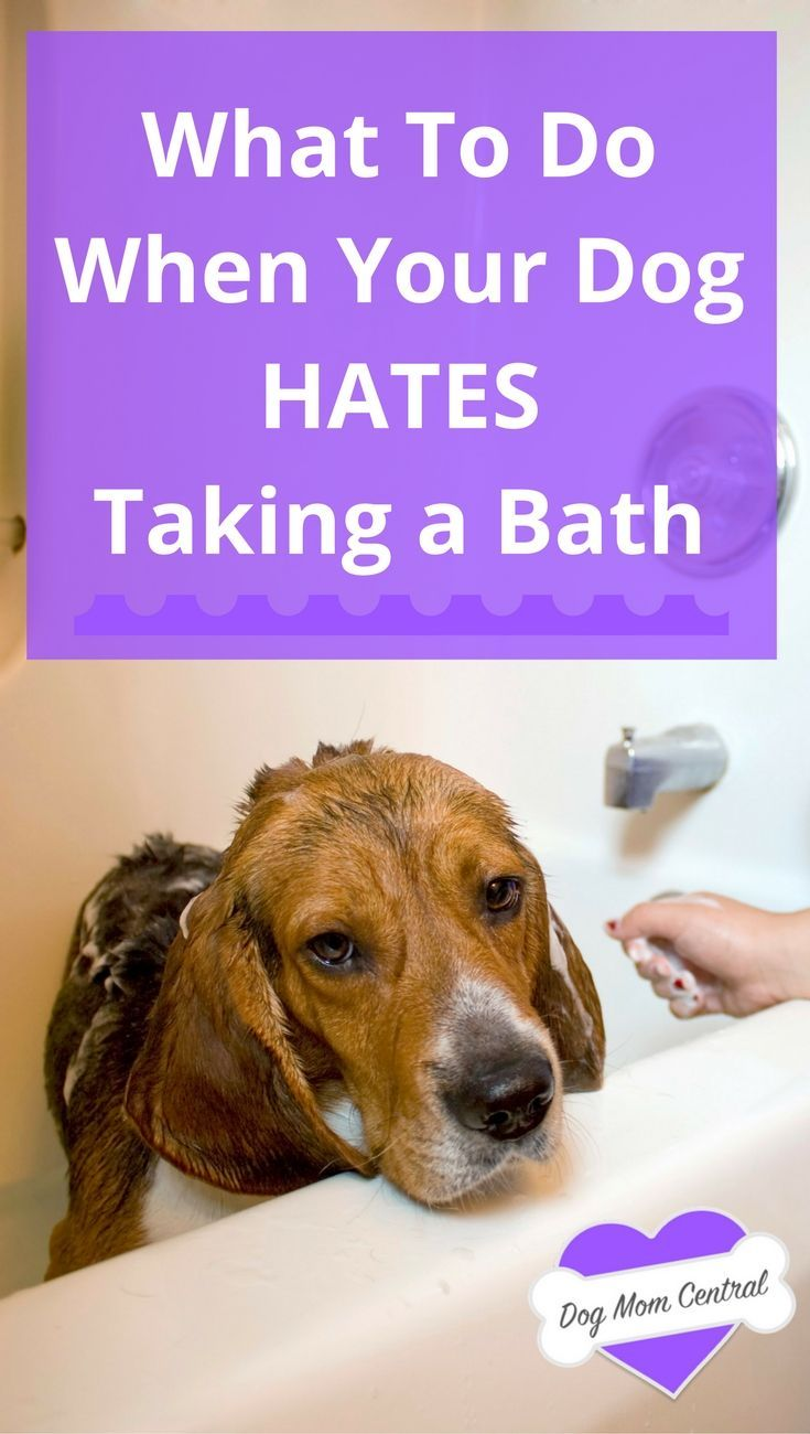 269 best Dog Grooming Tips images on Pinterest