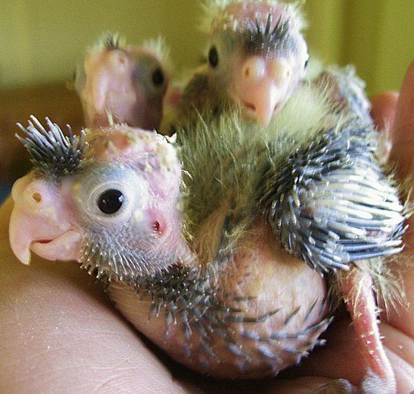 baby vultures   Condor / Vulture / Misc. Birds   Pinterest ...