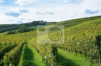 Choose a wall mural  , viticulture, winery - french winery. PIXERS wall murals made of great fabrics. Choose artistic photos from our catalog.