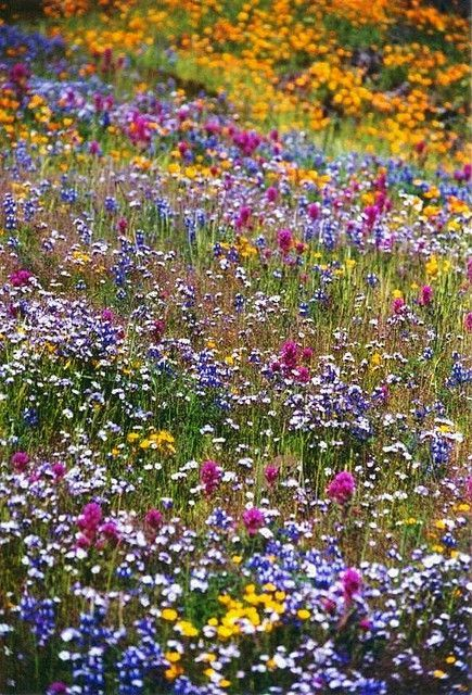 Beautiful Field of wild flowers