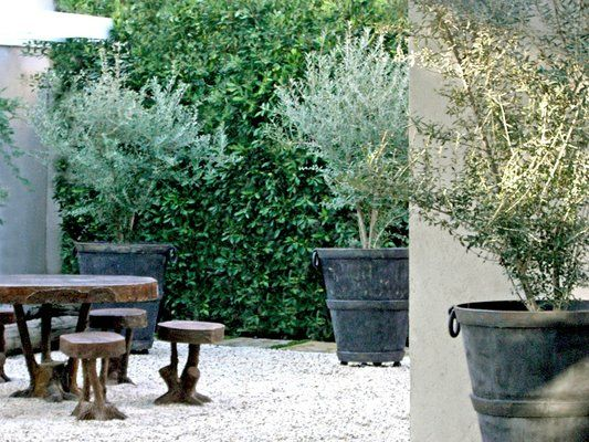 olive trees always add sophistication to a garden and their colour is just so beautiful!