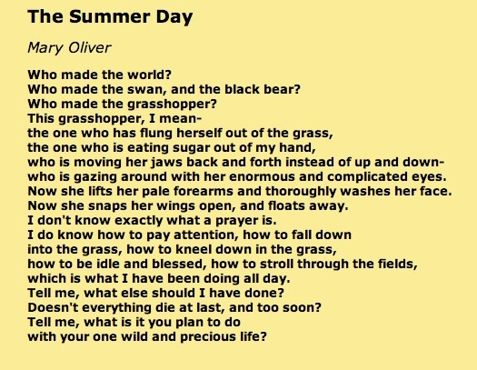 the summer day mary oliver essay A private person by nature, mary oliver has given very few interviews over the years instead, she prefers to let her work speak for itself and speak it has, for the past five decades, to countless readers the new york times recently acknowledged mary oliver as far and away, this country's best.