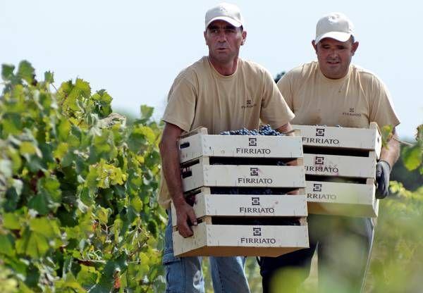 """Vino siciliono, annata 2014 tra le più """"fresche"""" ultimi 10 anni"""