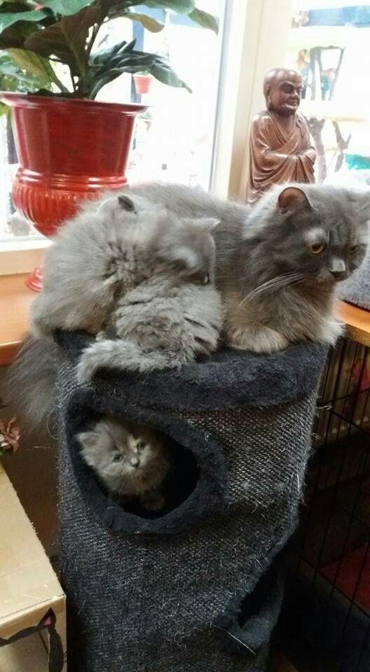 Daisy en haar kittens