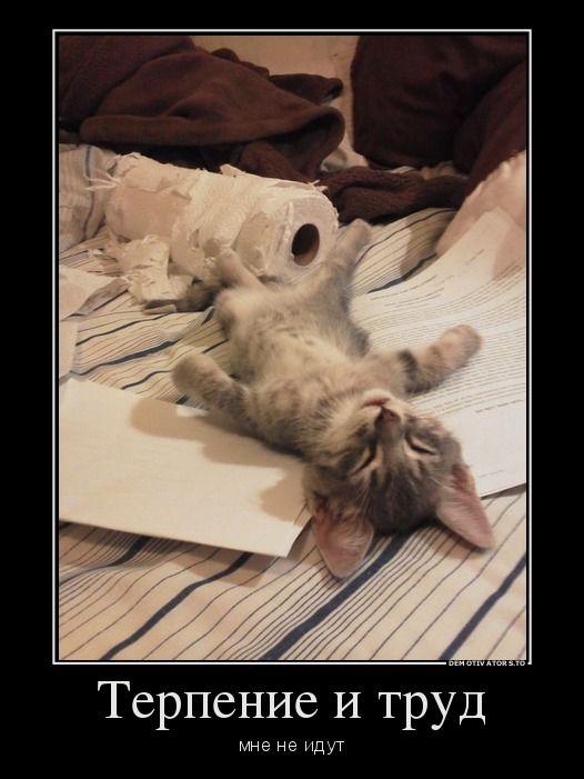 Котенок лентяй