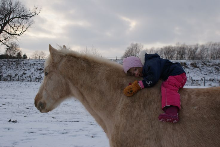 On the fifth day of Christmas...  Follow our story at https://www.facebook.com/pages/Conestogo-River-Horseback-Adventures/300198049923  #12DaysOfChristmas #OurHorses #HorsebackAdventures #WinterOnTheFarm #Waterloo