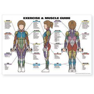 25 best ql stretch/rehab images on pinterest  quadratus