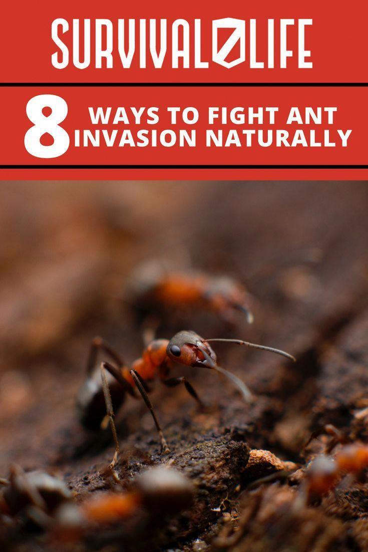 Pin By Prepper Survivalist On Prepper Shelter Ants Natural