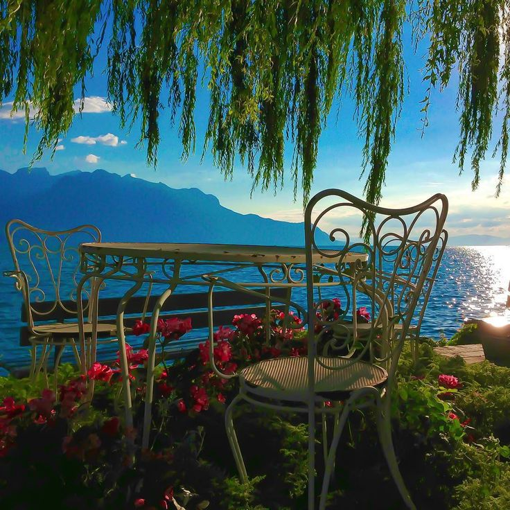 Switzerland.Vacations % on Instagram:  Location: #Montreux, Vaud. Photo Credit:  ©  @Switzerland.Vacations Tag your best photos #Switzerland_Vacations (+Locations name) for chance to be featured (Edited with @deluxefx #deluxefx App #colormesummer)