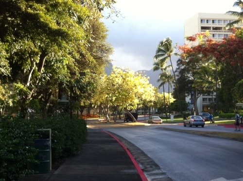 Sun on shower tree. East-West Road, UH-Manoa campus, Oahu, Hawaii