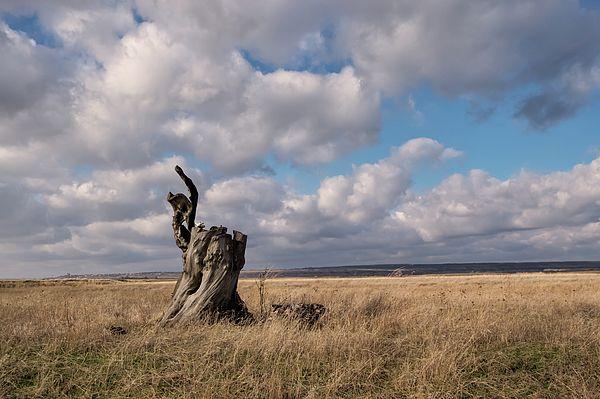 Natalya Antropova Photograph - Late Autumn by Natalya Antropova #NatalyaAntropovaFineArtPhotography#ArtDecor#HomeDecor#Travel#steppes#stump