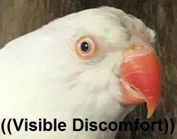 a9d40e833de6adcfd5db39dd1249befb 48 best bird memes images on pinterest parrots, animales and
