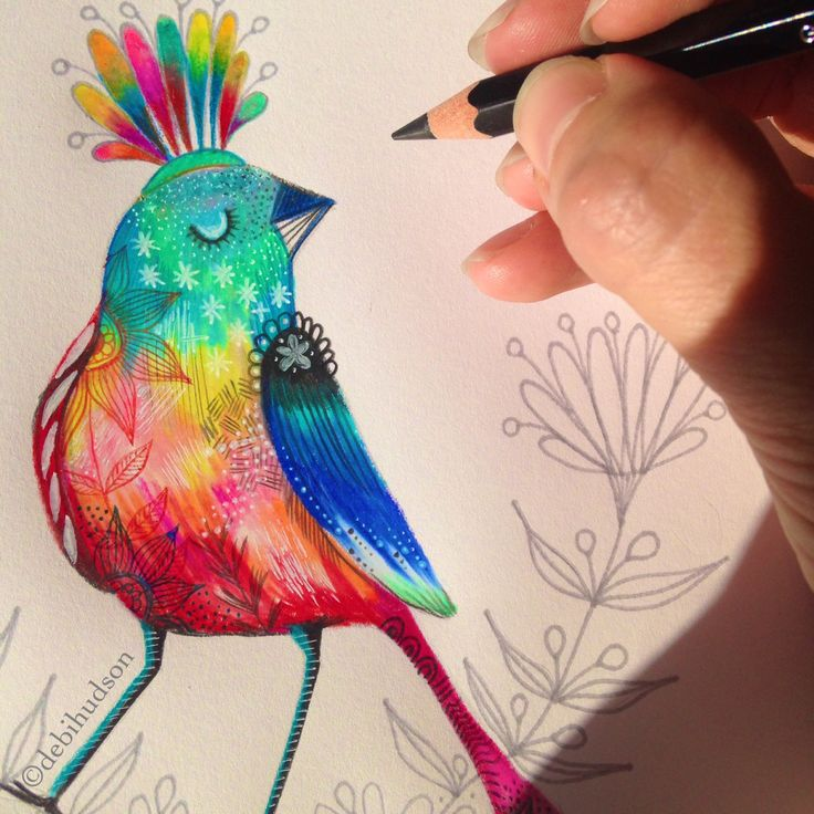 Mr Colourful by Debi Hudson in coloured pencil