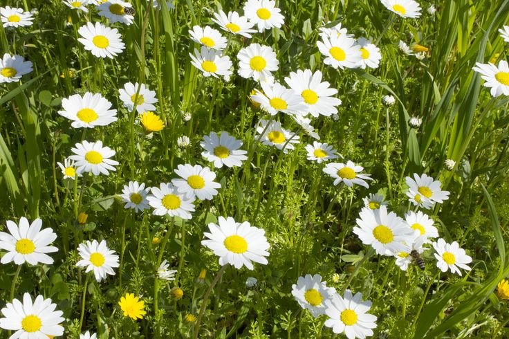 Spring in my Island Rhodes Greece