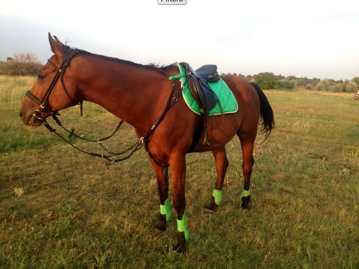 Horze Green Set, Sölibel rolled bridle, Kentaur Napoli Breastplate, Royal Rider Stirrup