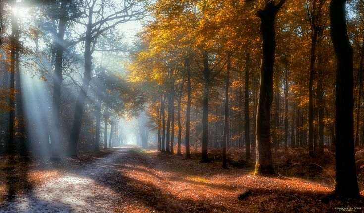 """The Holy Path - A wonderful autumn morning in The Mast Forest. Best viewed on black (click image or press """"M"""")"""