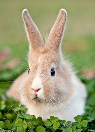 Easter Cutie