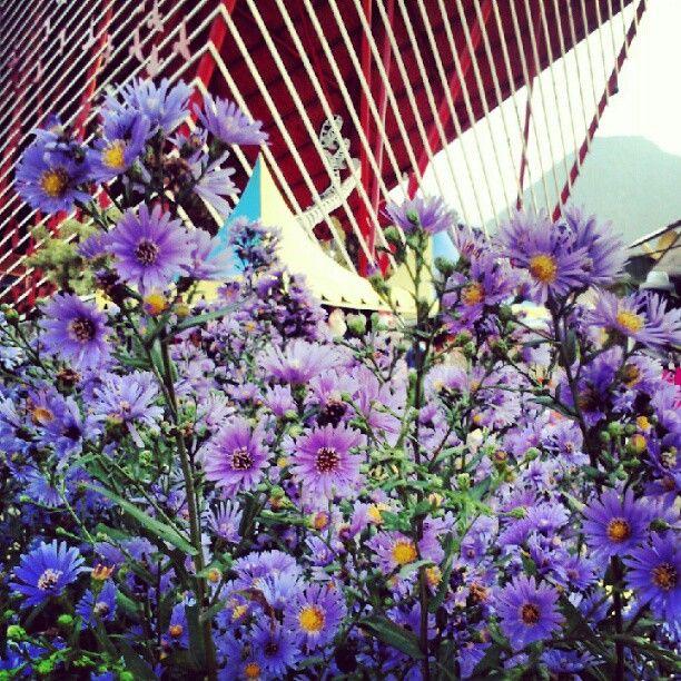 Purple flower. Batu secret zoo, Malang, Indonesia