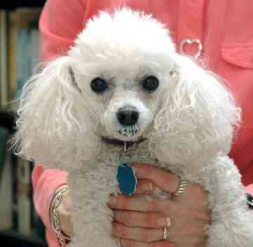 loved the miniature poodle that sat next to us on the plane :)