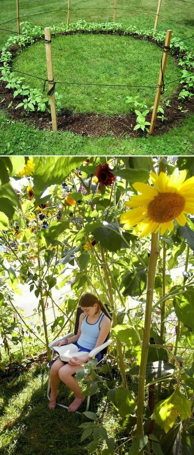 Grow a sunflower house for the kids to play in. / Forget kids-I want this!
