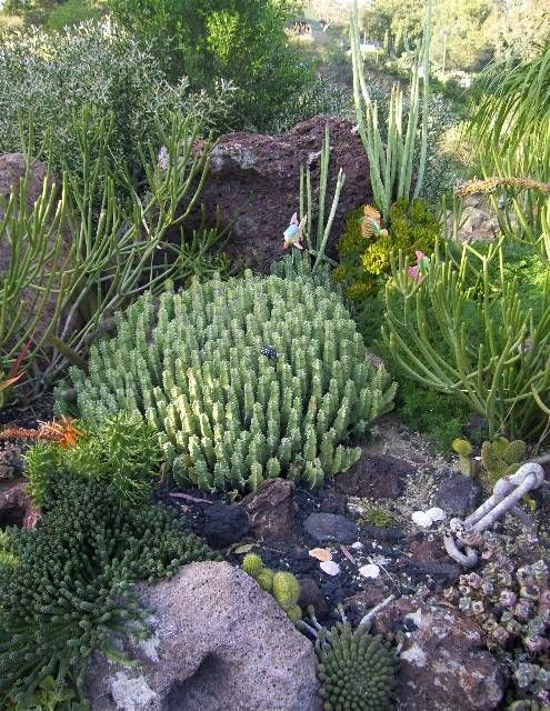 450 best Succulent Garden images on Pinterest