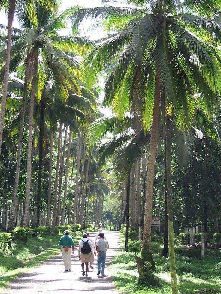85 best hawaiian gardens images on Pinterest | Tropical gardens ...
