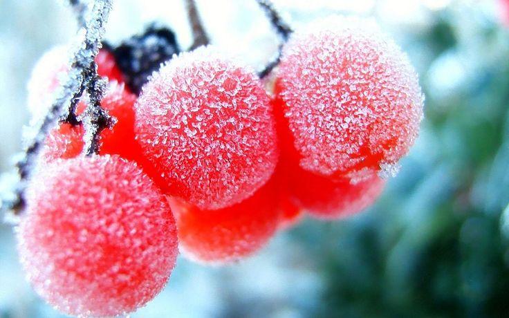 Оптимальный рацион питания сыроеда в зимний период