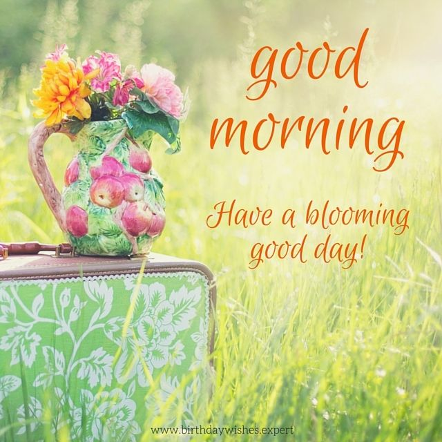 Good Morning. Have a blooming good day!