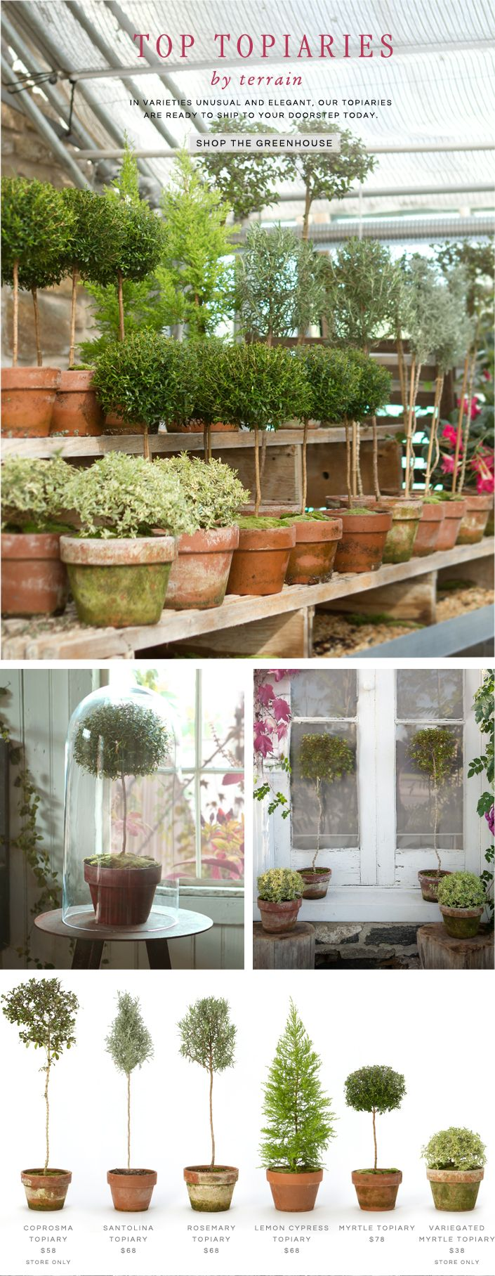 Top Topiaries by Terrain: In varieties unusual and elegant, our topiaries are ready to ship to your doorstep today.