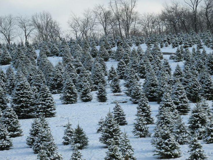 77 best hometown images on Pinterest | Pennsylvania, Johnstown ...