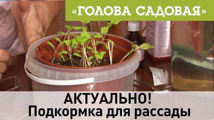 Голова садовая - АКТУАЛЬНО! Подкормка для рассады