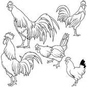 Stock Illustration of Rooster Set k2149296 - Search Clip Art, Drawings, Fine Art Prints, Illustrations, and Vector EPS Graphics Images - k2149296.jpg