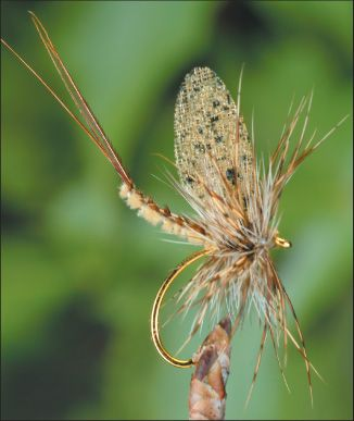 Brown P.H. Mayfly. Fly tying, a hobby my son gave up when he lost his job. :(