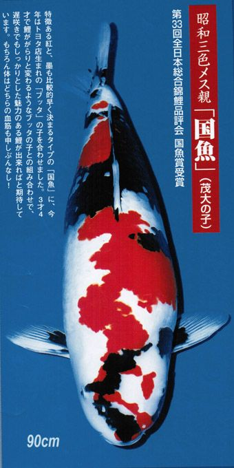 1000 images about koi varieties on pinterest fish for Expensive koi for sale