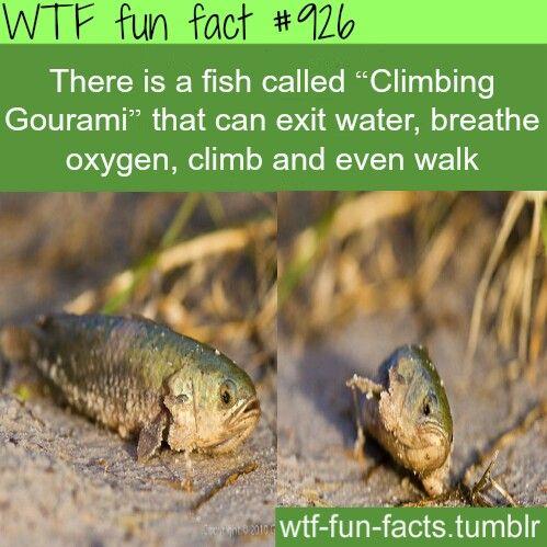 Imagine if it was a piranha