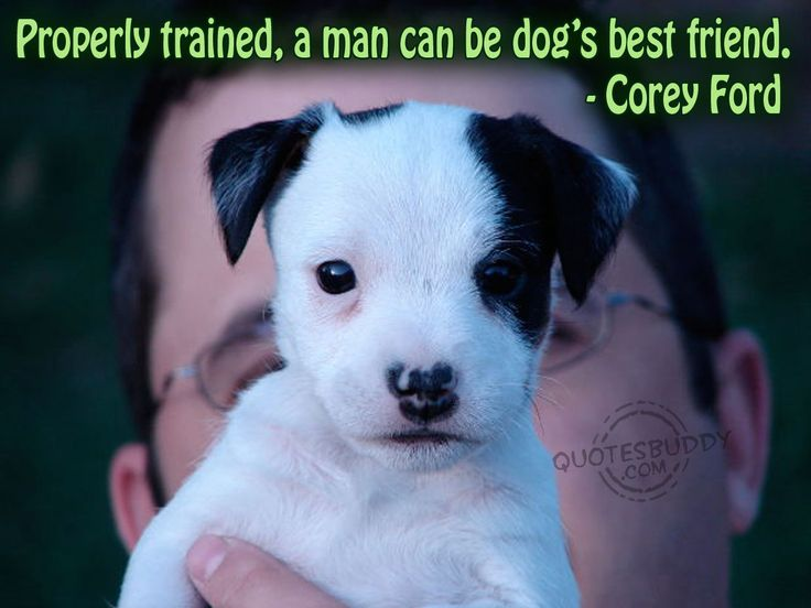Best Dog Best Friend Quotes Ideas On Pinterest Quotes On - Loveable dog portraits capture mans best friend from a funny perspective