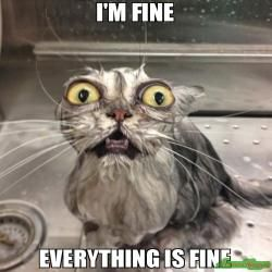 I'M FINE EVERYTHING IS FINE meme   Animals, Cats, Funny ...