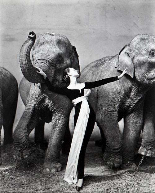 「ドヴィマ・ウィズ・エレファンツ」リチャード・アヴェドン 1955年