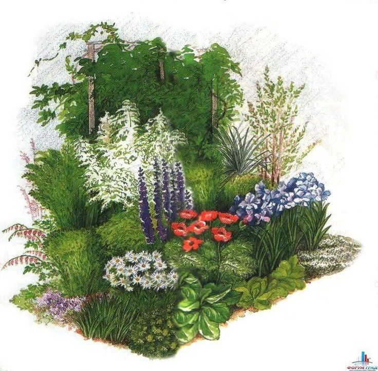 Клумбы, цветущие с ранней весны до поздней осени — 6 соток