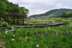 私おすすめの三重県の観光スポットの一つが二見しょうぶロマンの森 ここは一年中お花がいっぱい咲いていて花を眺めながらゆっくり散歩することができるのが魅力かな 定番の花から珍しい花まで種類も豊富 もしゆっくりと伊勢を観光できる時間があるならぜひ行って欲しいと思います tags[三重県]