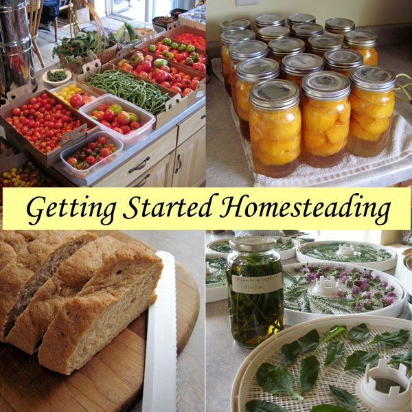 Getting Started Homesteading - Over 20 Posts to Help You Be More Self-Reliant