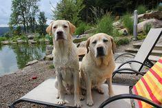 Urlaub mit Hund in Deutschland - Bayern: Eingezäunter Bade- & Schwimmteich. Tierischer Urlaub im Bayerischen Wald (c) Natur-Hunde-Hotel Bergfried