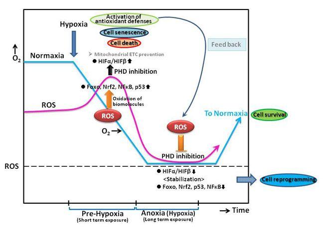 reactive oxygen species in plants pdf