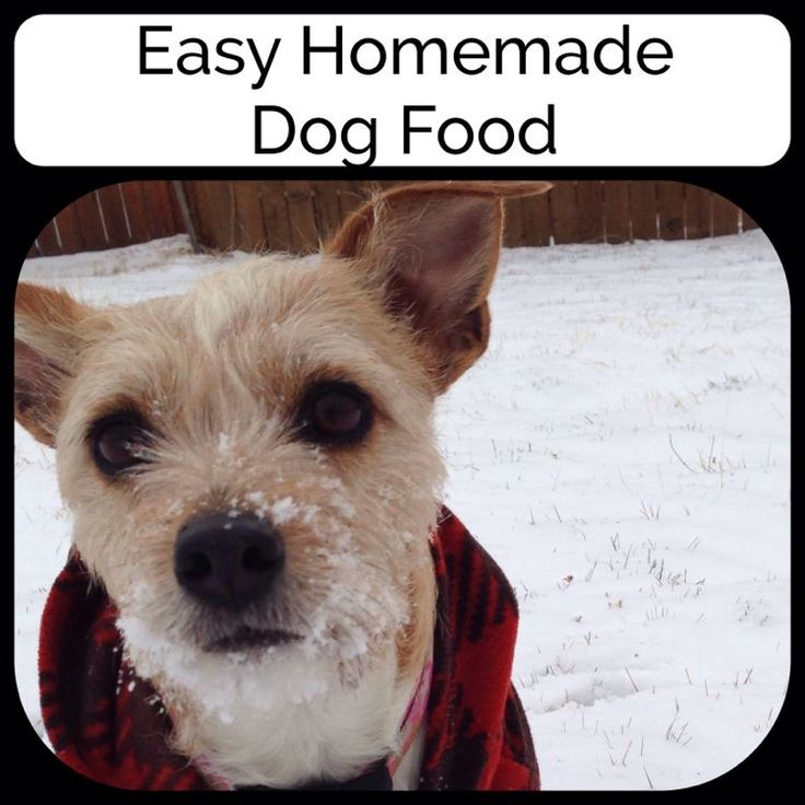 Here is an easy recipe for dog food.  They LOVE it!  #homemade_dog_food  #natural_dog_food #how_to_make_dog_food