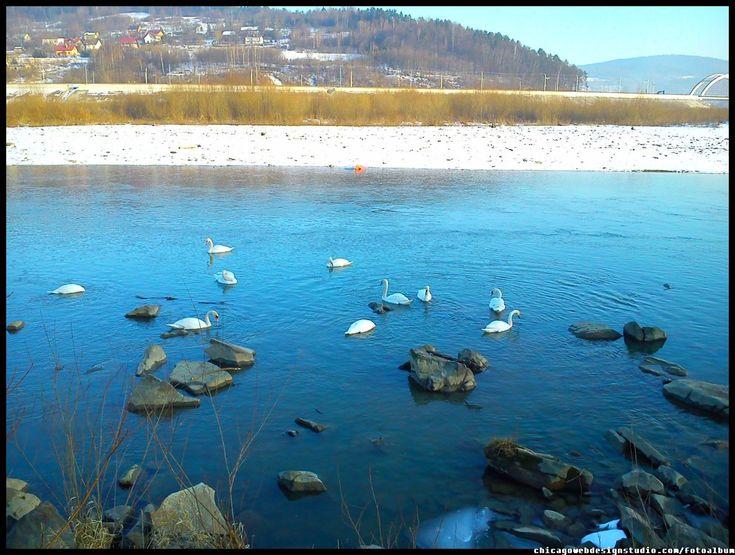 Skawce-Skawa-zima_13.jpg #Skawa #Polska #Poland #małopolskie #powiat-suski #Beskidy #Tarnawa-Dolna #Skawce #Zembrzyce #Zarębki #zalew #zapora #Jezioro-Mucharskie #Mucharz #zapora-w-Świnnej Porębie #rzeka-Skawa